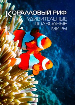 Коралловый риф: Удивительные подводные миры
